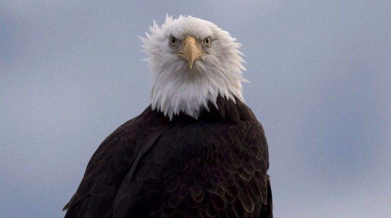 eagle.jpg.size.custom.crop.1086x647